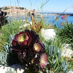 "<img class=""alignnone size-medium wp-image-768"" src=""https://www.creativesanctuary.net/wp-content/uploads/2017/07/collioure-succulents-water-300x300.jpg"" alt=""Collioure Succulents Water"" width=""300"" height=""300"" />"